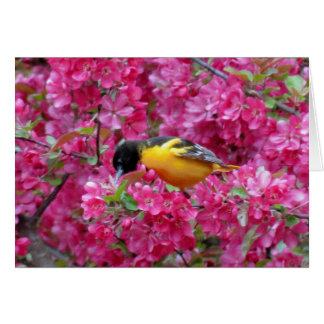 Baltimore Oriole in Crabapple Karte