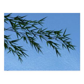 Bambus auf Wolkenhimmel Postkarte