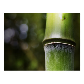 Bambuspostkarte (Farbe) Postkarte