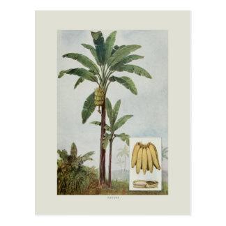 Banane Postkarte