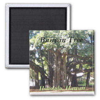 Banyanbaum Quadratischer Magnet