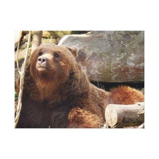 Bär am Zoo-Leinwanddruck Leinwanddruck