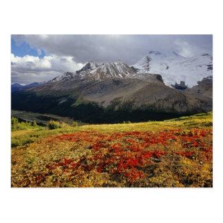 Bärentraube in früher Herbst Athabasca Spitze in Postkarte