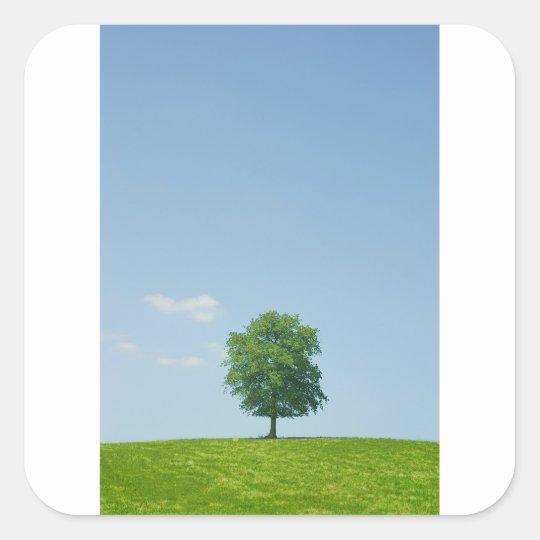 Baum auf einem Gebiet 2 Quadratischer Aufkleber