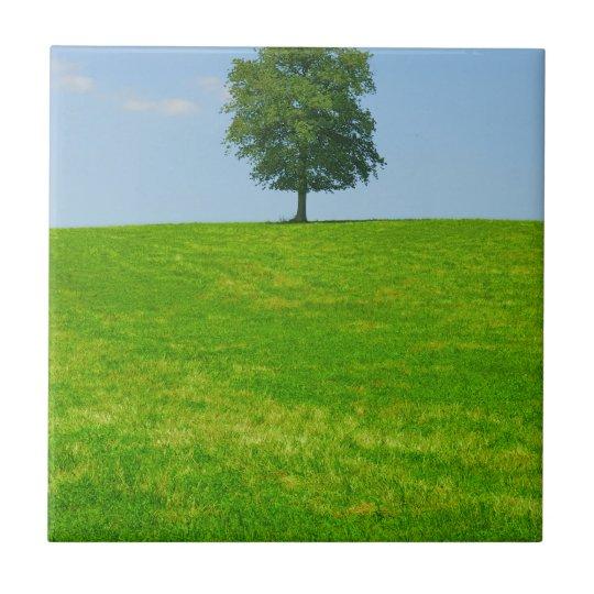 Baum auf einem Gebiet Kleine Quadratische Fliese