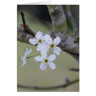 Baum-Blumen Karte