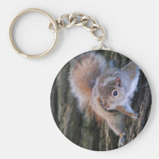 Baum-Eichhörnchen Keychain Schlüsselanhänger