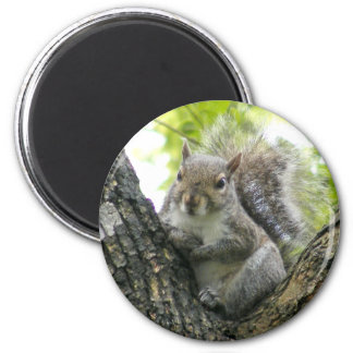Baum-Eichhörnchen Runder Magnet 5,7 Cm
