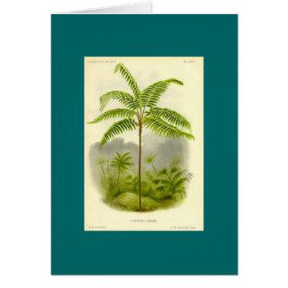 Baum-Farn Karte