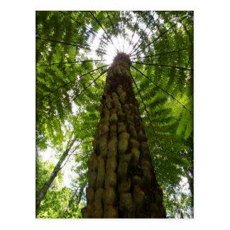 Baum-Farn Postkarte