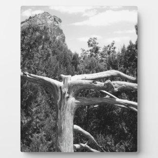 Baum Fotoplatten