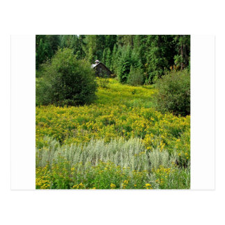 Baum-Frühlings-Holz Postkarten