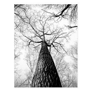 Baum in Schwarzweiss Postkarte