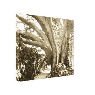 "Baum-Leinwand-Fotobeige Sepia 16 x 20"" coole Leinwanddruck"