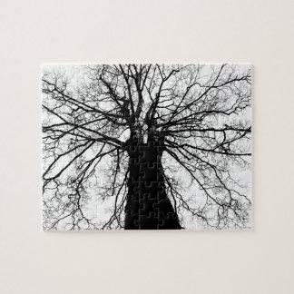 Baum-Silhouette in Schwarzweiss