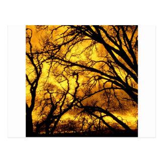 Baum-Teufel-Himmel-Berg Diablo Postkarten