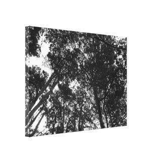 Baum-Überdachung, Hinterkanten-Park, Cardiff Leinwanddruck