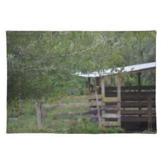 Baum und altes Scheunenflorida-Foto Tischset