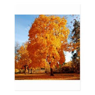 Baum-Wirklichkeits-Herbst Postkarte
