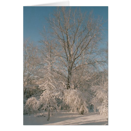 Bäume beladen mit Schnee Notecards Mitteilungskarte