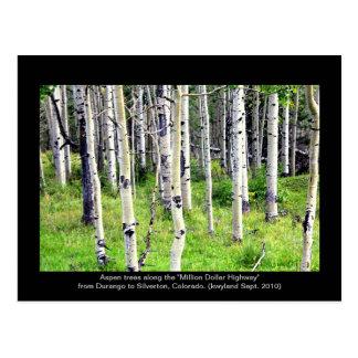 Bäume Colorados Aspen Postkarte
