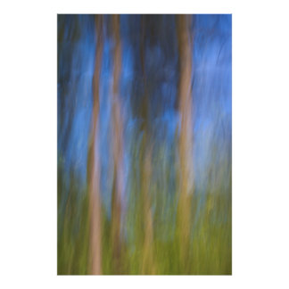 Bäume in der Reflexion Poster