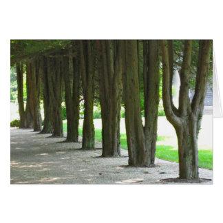 Bäume in Folge Karte