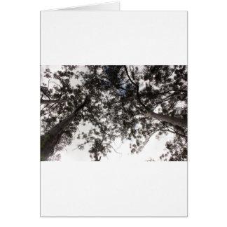 Bäume Karte