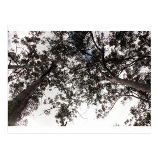 Bäume Postkarte