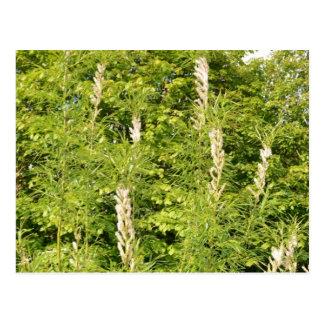 Bäume und Gräser Postkarte