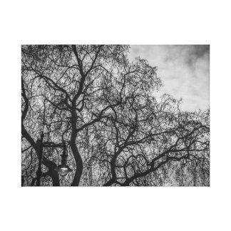 Baumniederlassungen im Schwarzweiss-Leinwanddruck Leinwanddruck