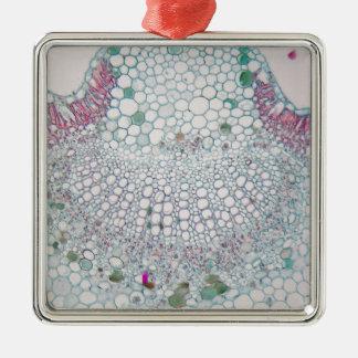 Baumwollblatt unter dem Mikroskop Silbernes Ornament