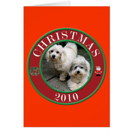 Baumwolle De Tulear am Weihnachten Grußkarte