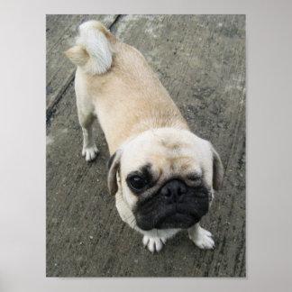 Bauwk… Mops-Hund… かわいい子犬 Poster