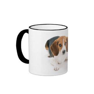Beagle-Hund Tasse
