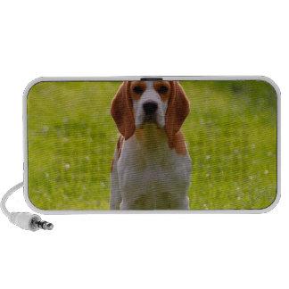 Beaglewelpe auf Schutz Laptop Lautsprecher