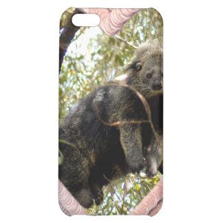 Bearcat-Speck-Kasten