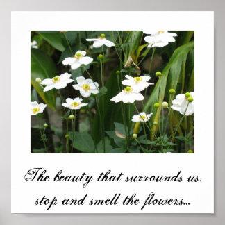 Beauté ; fleurs poster