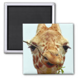 bébé drôle de girafe aimants