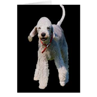 Bedlington Terrier-HundeFotoraum-Grußkarte Karte