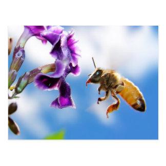 Bee Postkarte