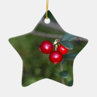 Beeren eines wilden Lingonberry (Vaccinium Keramik Stern-Ornament