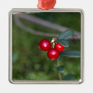 Beeren eines wilden Lingonberry (Vaccinium Quadratisches Silberfarbenes Ornament