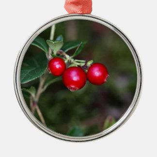 Beeren eines wilden Lingonberry (Vaccinium Rundes Silberfarbenes Ornament