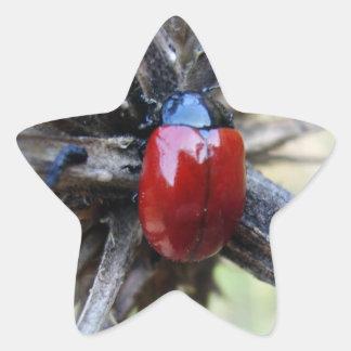 beetle  Stern-Aufkleber