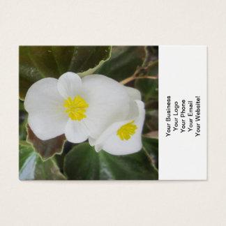 Begonien-Garten-Blumen-Weiß Visitenkarte