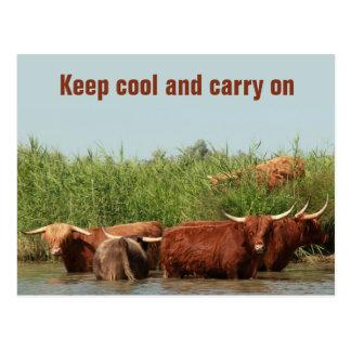 Behaltende cool und weitermachende Longhornkühe Postkarte