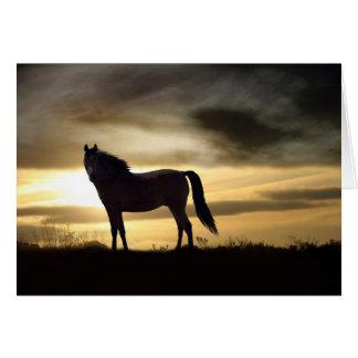 Beileids-Karte für Verlust des Pferds Grußkarte