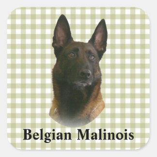 belgische malinois quadratischer aufkleber