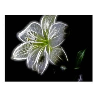 Belichtet wie Kontur einer weiße Lilie Blume Postkarte